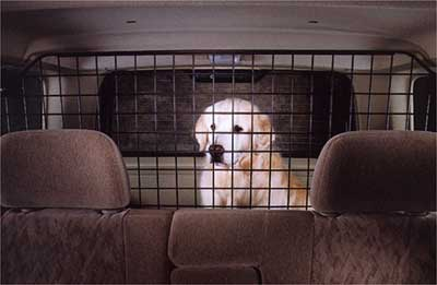 2001 Infiniti QX4 Pet Guard Divider 999M1-VK000